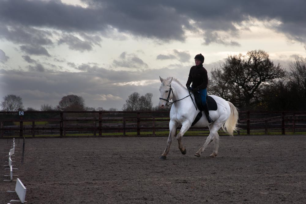 Using Squares, Medium Canter and Rein-Back